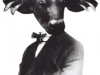 cow chap