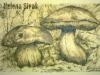Mushroom-2 by Helena Sivak