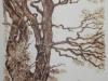 Tree by Helena Sivak