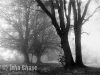 Misty Wood by John Chase